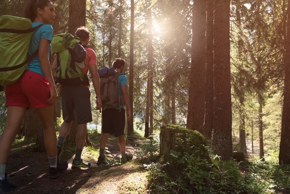 Three man and woman walking along hiking trail path in forest woods during sunny day. Group of friends people summer adventure journey in mountain nature outdoors. Travel exploring Alps, Dolomites